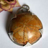 Echinoidea, sterling silver sand dollar pendant