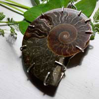 Cephalopoda, witness history pendant in sterling silver and fossilized ammonite